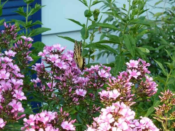 Sage Gardens, Wellington County Gardener